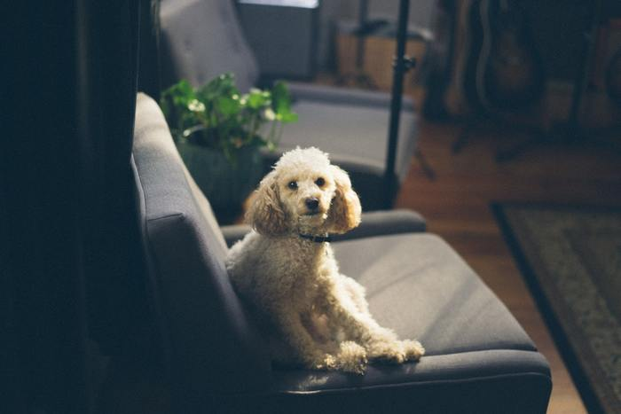 Designing A Pet-Friendly Home
