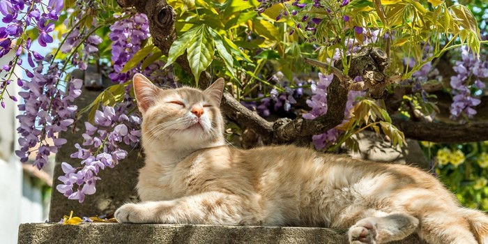 Building a Pet Friendly Garden for Your Pet
