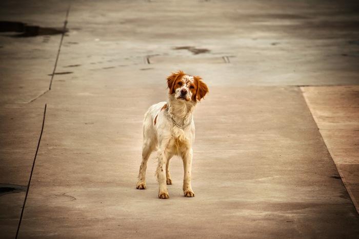 Stray & Lost Animals