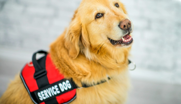The Different Classifications of Service Animals
