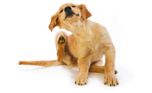 Protecting Your Pooch From Pesky Pests