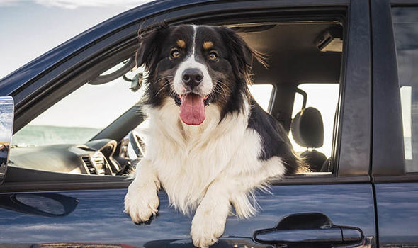 Tips For Safely Taking Your Dog On A Road Trip