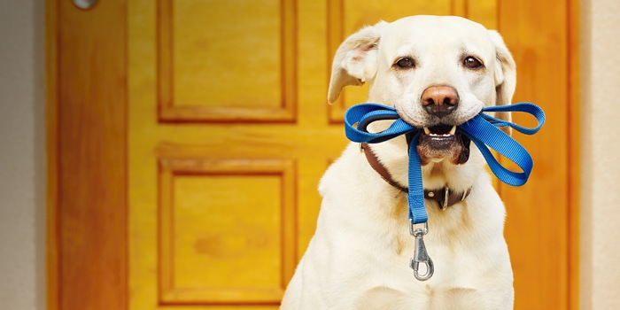Collar and leash options for your pet