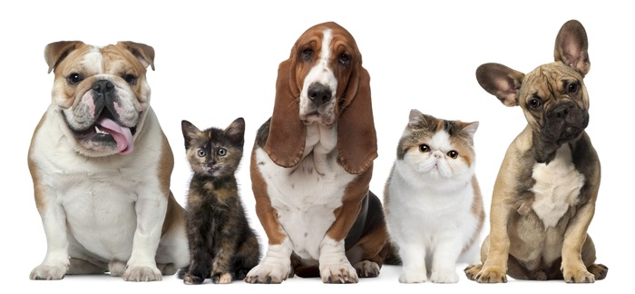 20 Little Known Facts About Cats and Dogs