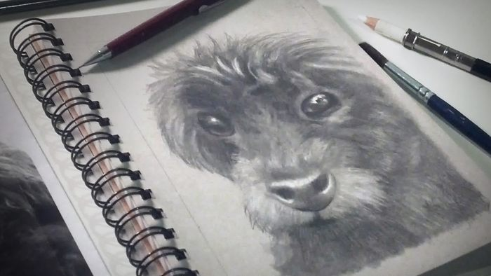 Your Guide to Drawing Your Favorite Four-Legged Friend