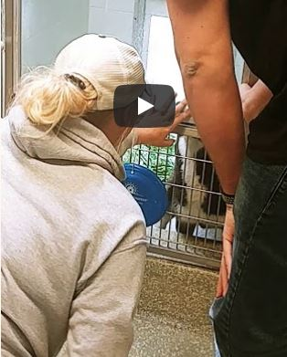 Owner reunited with dog that traveled 240 miles from Savannah, GA to Daytona Beach , FL