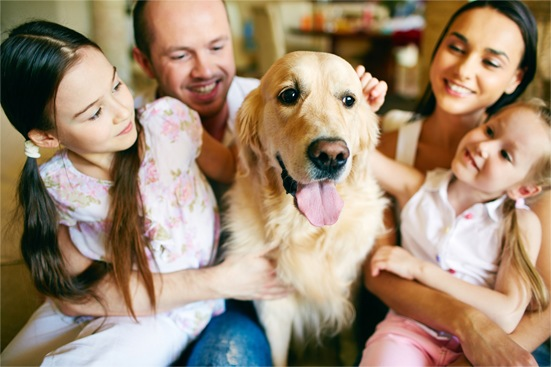 Facts about The Top 8 Most Adopted Dog Breeds