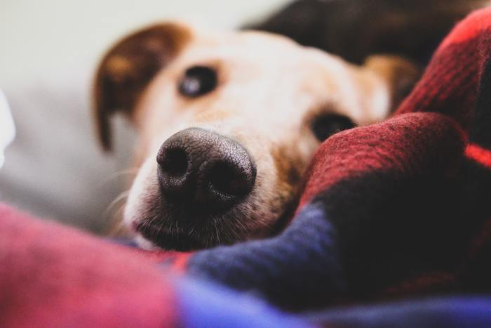 Keeping Your Dog Warm And Healthy While Traveling In Winter