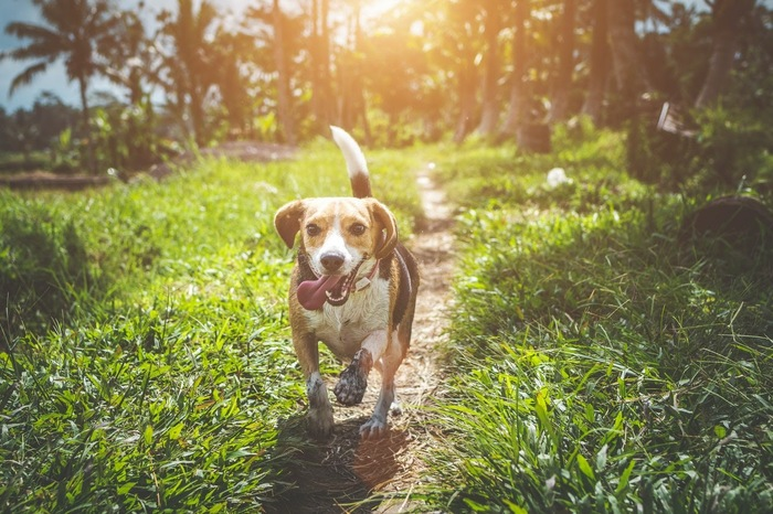 Safety tips for enjoyable outdoor activities for your dog