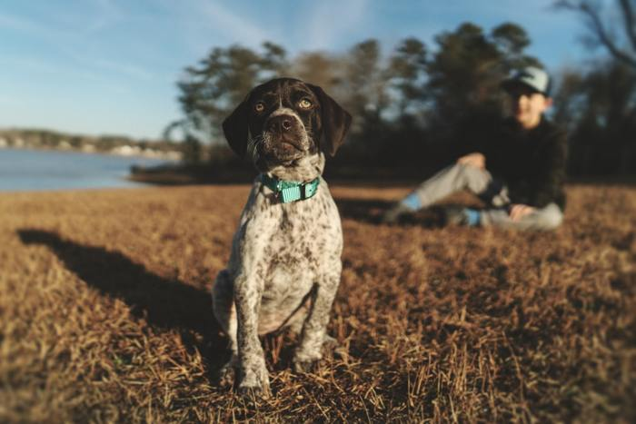 Dogs; A Vital Help For Children With Behavioral Issues