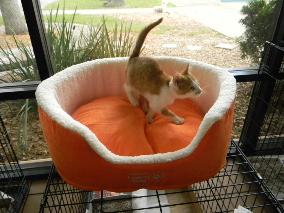 Adopt a Cat Get a FREE Bed! While supplies last!